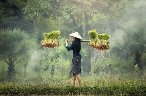 lors d'un voyage au vietnam